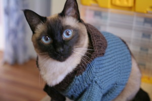 Close up of Loki in his sweater